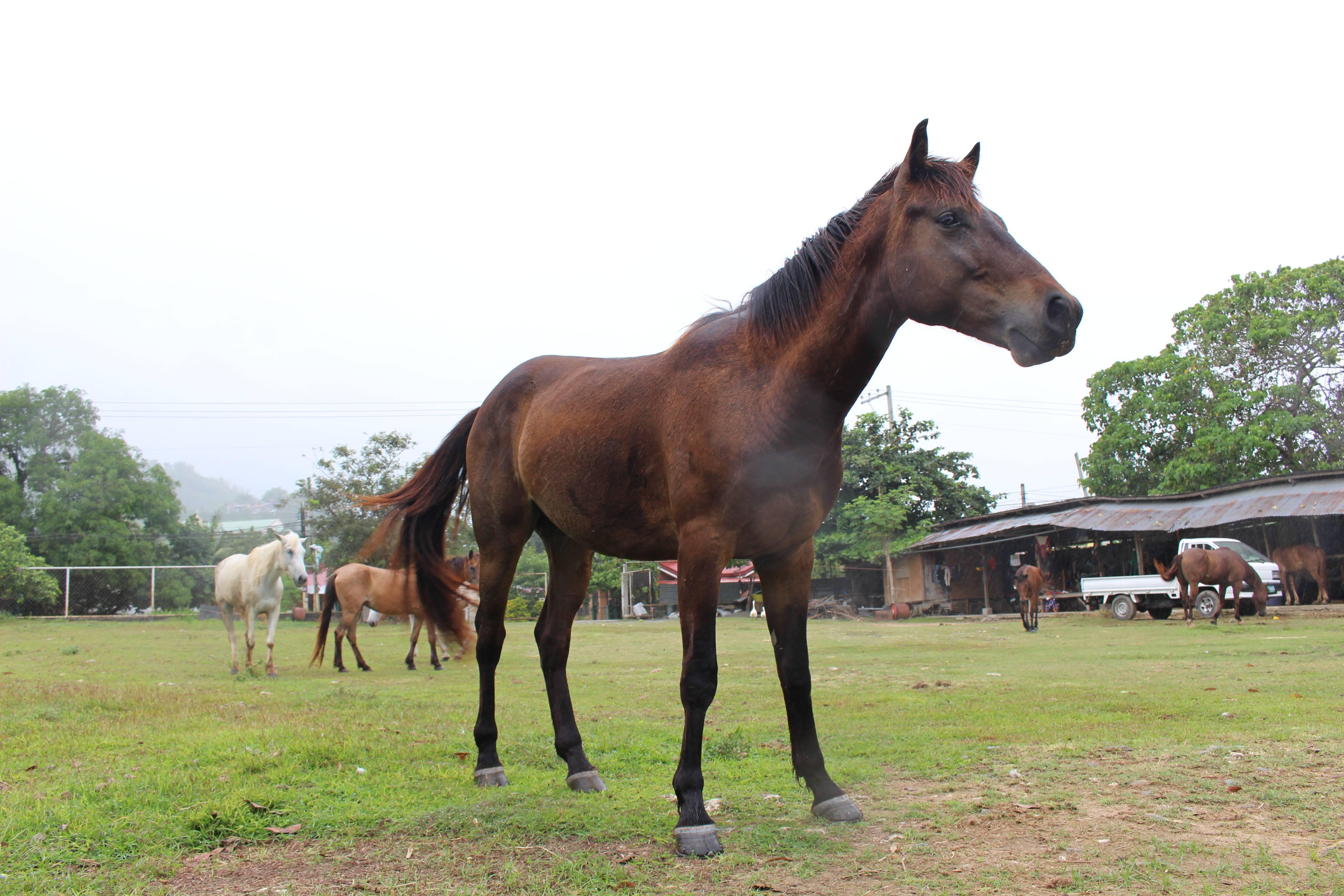 自然を楽しむ乗馬体験
